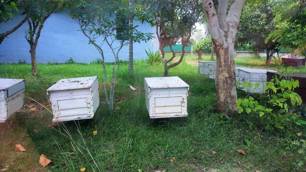 ฟาร์มผึ้งเชียงใหม่